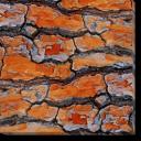 Tablou Canvas Scoarta de Copac