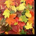 Tablou Canvas Frunze Cazute
