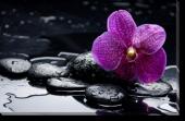 Tablou Canvas Pietre si Orhidee