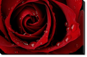 Tablou Canvas Trandafir Rosu