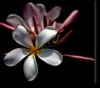 Tablou Canvas Floare pe Fundal Negru
