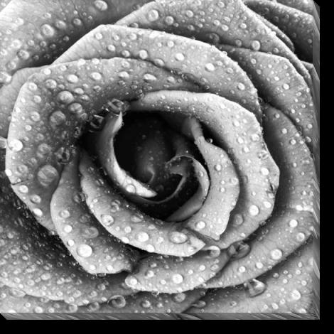 Tablou Canvas Trandafir Alb-negru