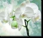 Tablou Canvas Orhidee Alba