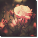 Tablou Canvas Trandafir Vintage