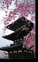 Tablou Canvas Pagoda