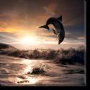 Tablou Canvas Delfin