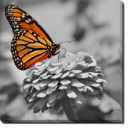 Tablou Canvas Fluture Colorat