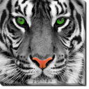 Tablou Canvas Tiger Face
