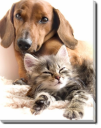 Tablou Canvas Kitty and Dog